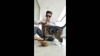 Science Diet Sensitive Stomach & Skin Tuna & Vegetable Entrée Wet Cat Food Eating Demonstration