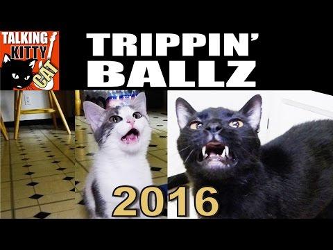 Talking Kitty Cat 45 - Trippin Ballz 2016