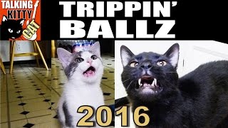 talking kitty cat 45 trippin ballz 2016