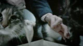 Фрагмент фильма