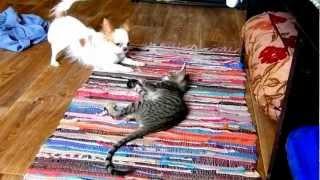 Ориенталка играет с собакой.