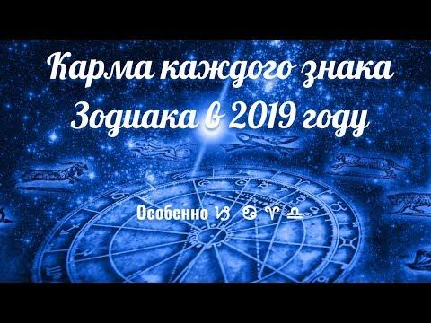 Химки 2019