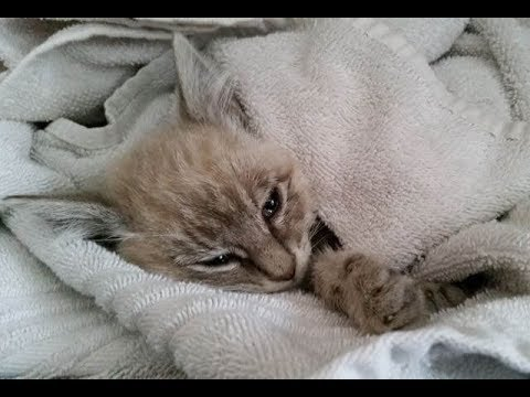 This Kitten Was Just Hours From Death, Then A Miracle Happened !