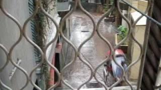 Badla dine mone pore - Habib (Cholo brishtite bhiji)