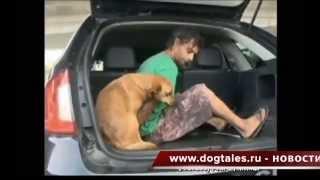 Преданная собака последовала в полицейскую машину за своим хозяином, подозреваемым в краже
