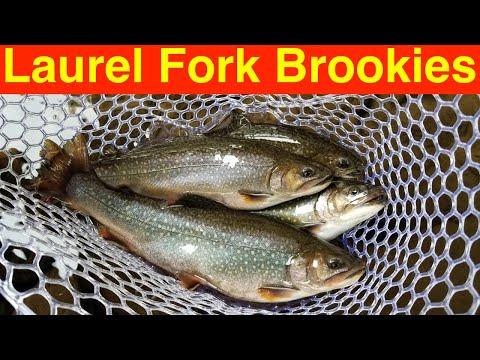 Trout Fishing West Virginia's Laurel Fork