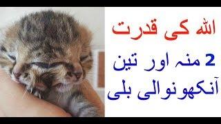 Allah Ki Qudrat Ka Karishma2017 | subhan Allah don't Miss This Video