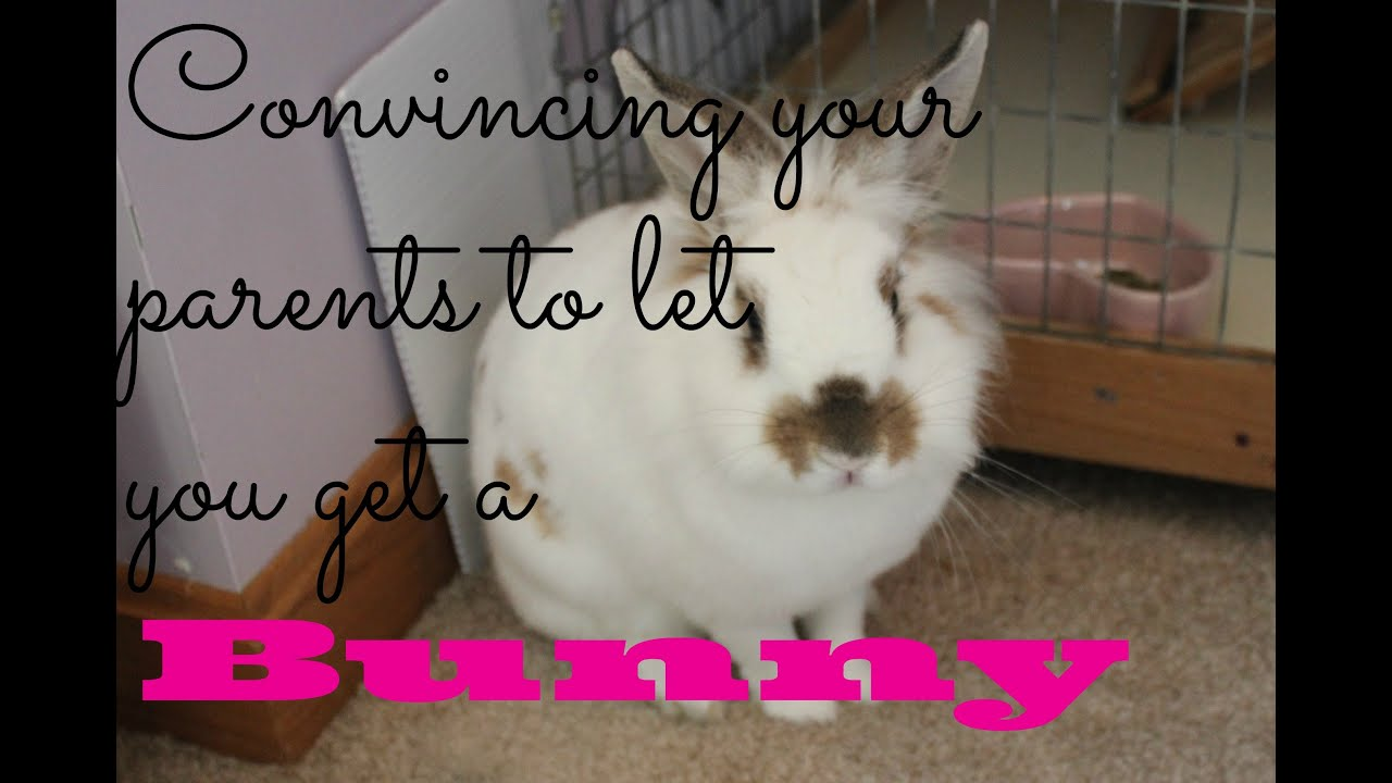 How can I persuade my Mom to let me buy a rabbit?