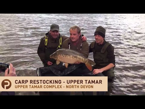 Upper Tamar Fishing Lake Complex North Devon - Restocking Carp
