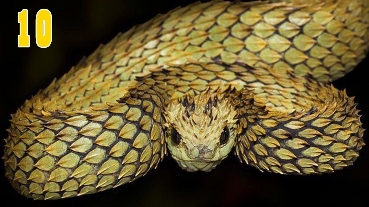 10 อันดับ งูที่มีพิษร้ายแรงที่สุดในโลก(ถึงตายได้)