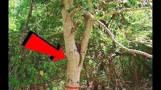 اذا رأيت هذه الشجرة اهرب بسرعة ولا تقترب l شيئ خطير مخبئ