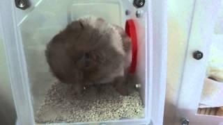 (hamster、ハムスター)心疼的一摔,別撐了(´・ω・`)