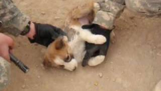 How Army Soldiers Treat Puppies