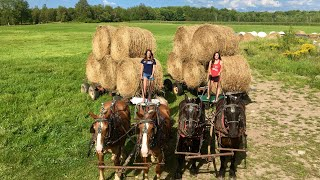 MY DAUGHTERS HELP WITH HAULING BALES // Farming With Draft Horses
