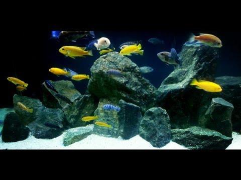 International Fish Tanks Ep 2