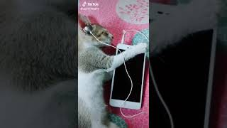 Cat Dance On Leke Pahla
