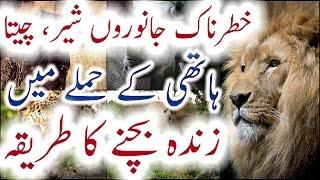Sher Cheeta Haathi Saanp Bhainsay Ke Hamle Mein Zinda Bachne Ka Tareeqa