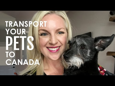 TRANSPORTING PETS To Canada: How To