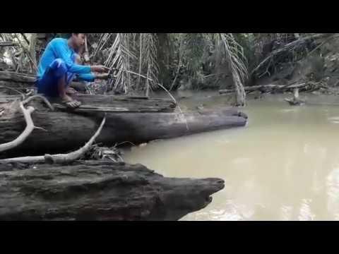 Mancing Ikan Baung Di Sungai Keruh