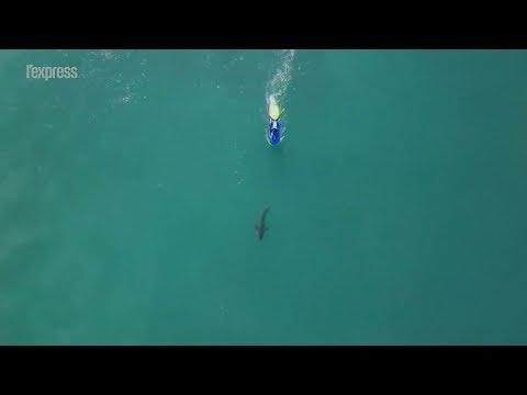 Afrique du Sud: un requin s'invite dans une compétition de surf