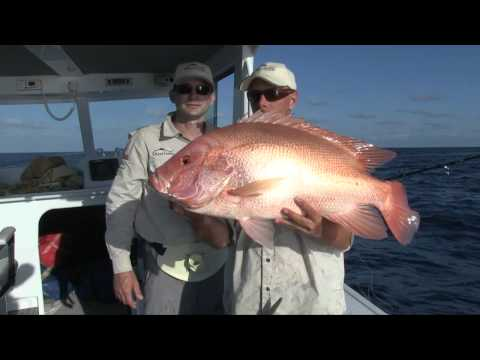 Wicked Fishing Hits Double Island Point Catching Red Emperor, Large Mouth Nanngai And Various Cod