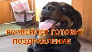 РОТВЕЙЛЕР ГОТОВИТ ПОЗДРАВЛЕНИЕ.воспитание и дрессировка собаки