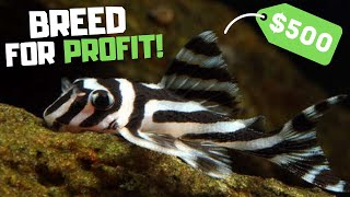 Breed This Fish t๐ Make Money! Top 7 Fish to Breed for Profit!