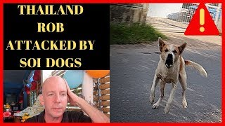 GETTING ATTACKED BY SOI DOGS IN THAILAND V470