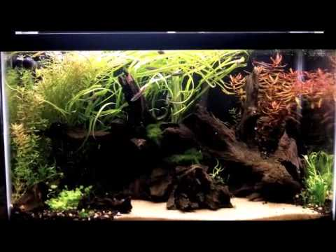 Best Fish For A Planted Aquarium