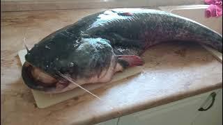 Дон, рыбалка, сом в Лискинском районе!