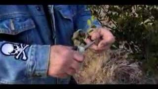 How to Grow Mountain Laurel Plants from Seeds : Growing Mountain Laurels: Part 1