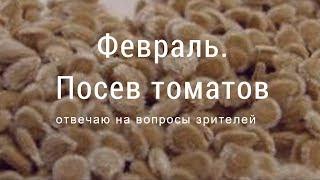 Февраль. Посев томатов. Отвечаю на вопросы зрителей