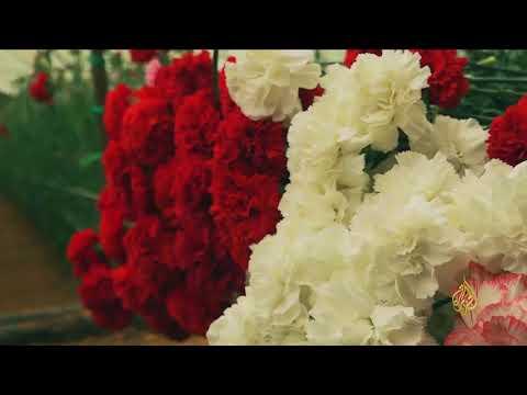 هذا الصباح-رواج متزايد لسوق الزهور شمالي سوريا  - نشر قبل 3 ساعة