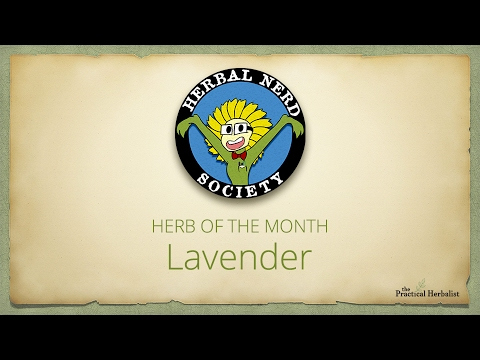 Herbal Nerd Society - Herb of the Month - Lavender