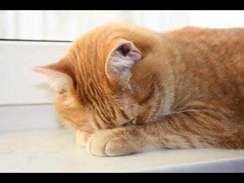 В ветклинику Мурманска принесли избитого кота. Послевкусие.