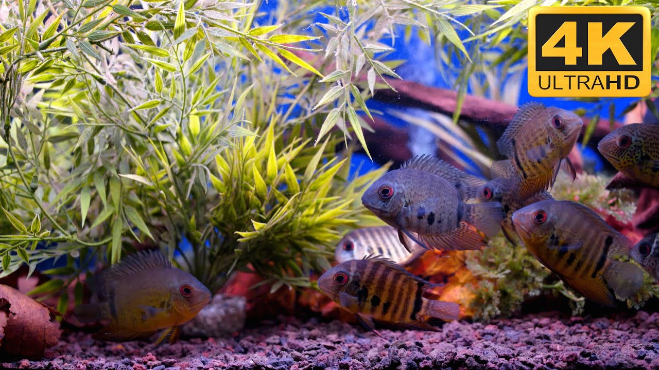 ultra hd fish tank video and screensaver - youtube