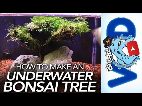 how-to-make-an-underwater-bonsai-tree-|-bigalspets.com