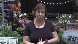 Garden Plant Care Getting Rid Rats Without Poison