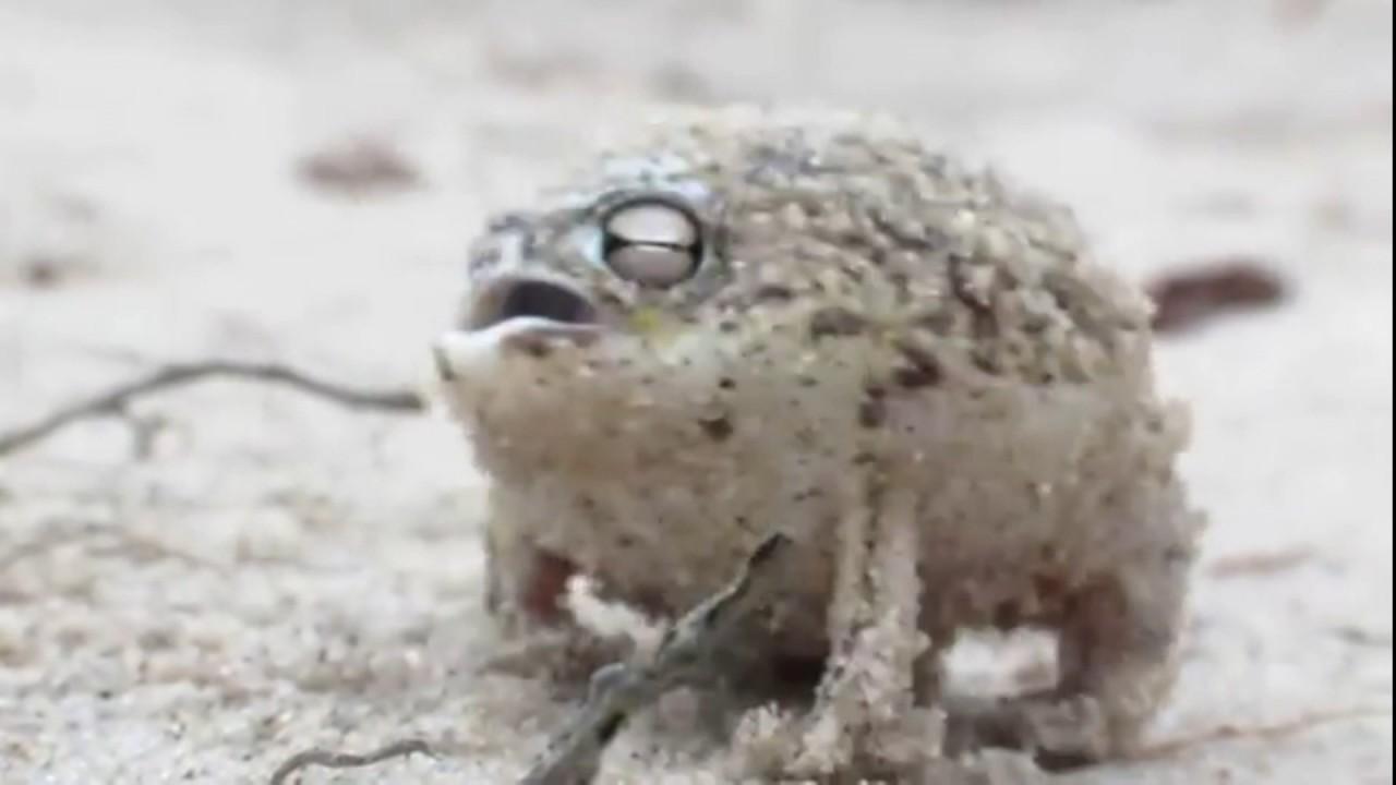 Froggo - YouTube