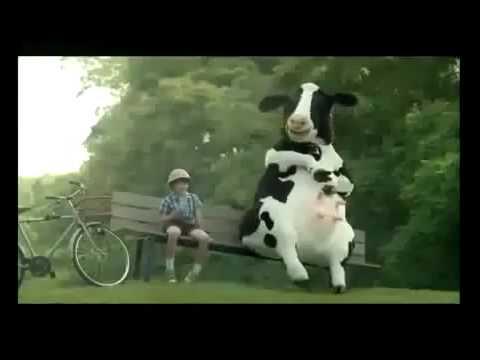 [HD]Quảng Cáo Vinamilk hài hước – Chú bò cười ngất ngây