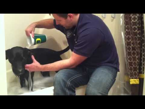 Best way to give a dog a bath YouTube