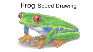 Red-Eyed Tree Frog Time-lapse / Speed Drawing