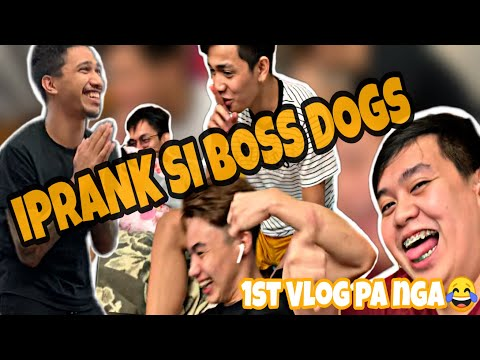 IPRANK SI BOSS DOGS! (PREPARATION SA MPL QUALIFIERS)