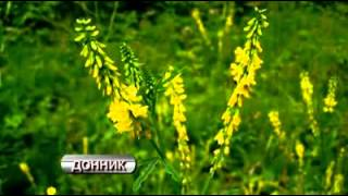 Целебные травы