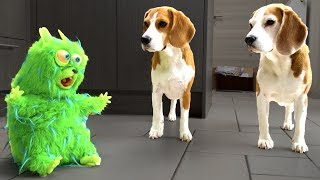 Freaky Alien Hamster Vs Funny Dogs Louie And Marie