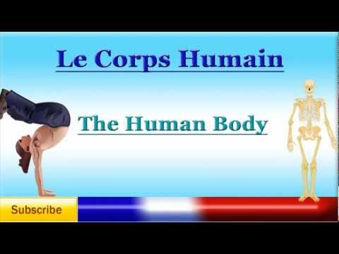 French Lesson 42 - Learn French Body Parts Vocabulary - Las partes del cuerpo en francés