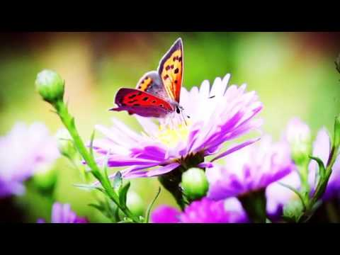Good Morning Wishes Butterflies And Flowers Video Whatsapp Youtube