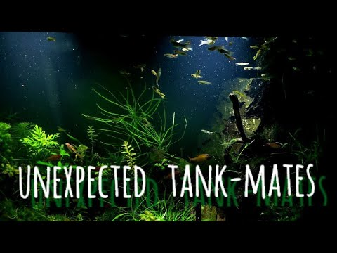 Keeping Aggressive Fish In A Community Tank? How To Stop Fin Nipping In Your Aquarium