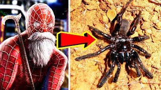 THE OLDEST SPIDER IN THE WORLD