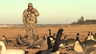 AMAZING!!! Man catches Canadian Goose With BARE HANDS